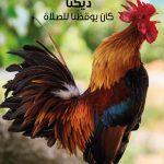 FB_IMG_1582455799964.jpg