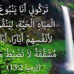 FB_IMG_1592791174294.jpg